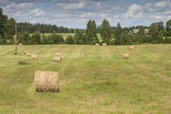 Pacotes de feno no campo de exploração agrícola Fotos de Stock Royalty Free