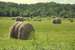 Pacotes de feno no campo do campo Imagens de Stock