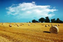 Pacotes de feno no campo dourado Fotografia de Stock