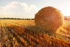 Pacotes de feno no campo dourado Foto de Stock