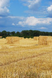 Pacotes de feno no hayfield Imagem de Stock Royalty Free