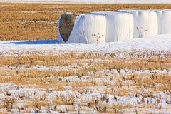 Pacotes de feno no inverno Imagens de Stock