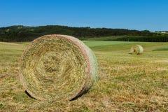 Pacotes de feno no prado Colhendo o feno secado Prado empurrado Imagem de Stock Royalty Free
