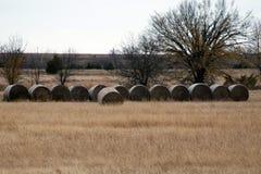 Pacotes de feno no prado da grama Imagens de Stock Royalty Free