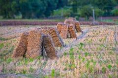 Pacotes de feno nos prados no por do sol com céu azul e nuvens, Gubb Foto de Stock