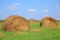 Pacotes do feno em um grande campo Composição da natureza Foto de Stock