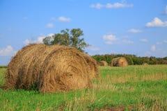 Pacotes do feno em um grande campo Composição da natureza Foto de Stock Royalty Free