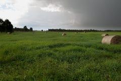 Pacotes do feno na paisagem da grama verde foto de stock royalty free