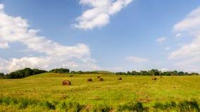 Pacotes do monte e de feno da grama verde Imagem de Stock Royalty Free