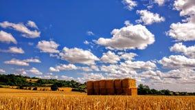pacotes dourados da palha em um campo Imagem de Stock