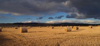 Pacotes em um campo após o tempo de colheita Fotografia de Stock