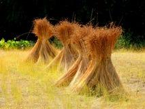 Pacotes fora do campo do weat em um summerday Fotografia de Stock
