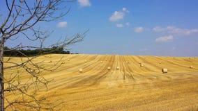 Pacotes no campo colhido no verão Foto de Stock