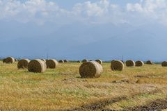 Pacotes redondos da palha no campo de grão cortado Fotos de Stock Royalty Free