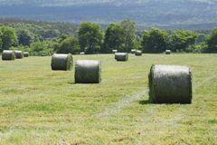 Pacotes redondos da palha no prado Imagens de Stock
