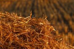 Pacotes redondos do feno ou da palha dentro no campo Close-up Imagens de Stock Royalty Free
