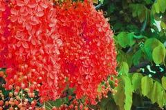 pacthwork Duschblumenblumenstrauß und grünes Blatt parken öffentlich Stockbilder