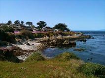 Pacyficzny gaj, Kalifornia zdjęcia stock