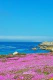 Pacyficzny gaj, Kalifornia, Stany Zjednoczone Ameryka, Usa zdjęcia stock