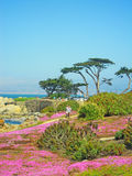 Pacyficzny gaj, Kalifornia, Stany Zjednoczone Ameryka, Usa fotografia stock
