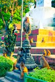 Paczka małpy w Swayambhunath kompleksie w Kathmandu zdjęcie royalty free