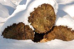 padał śnieg drewna Zdjęcie Stock