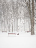 pada śnieg Obraz Royalty Free