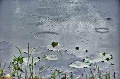 Pada na lasowym jeziorze i na wodnych kroplach Zdjęcia Stock
