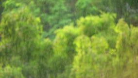 Pada w lesie z ostrością na deszczu zbiory