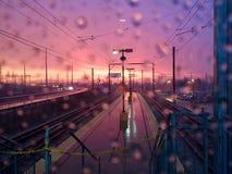 Padać w ranku Obrazy Royalty Free