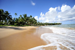 padadise na plaży obrazy stock