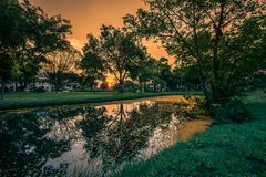 Padauk的下落的黄色瓣开花盖池塘用晚上天空在Phutthamonthon公园,佛统府, Tha 库存图片