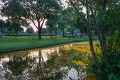 Padauk的下落的黄色瓣开花盖池塘用晚上天空在Phutthamonthon公园,佛统府, Tha 免版税库存图片