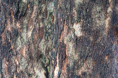 Padauk Tree Bark, Texture Background Stock Image