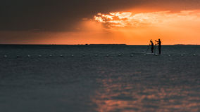 Paddel-Internatsschüler bei Sonnenuntergang in Schlüssel largo Lizenzfreie Stockbilder
