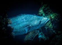 Paddelendstückfische Lizenzfreie Stockfotos