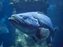 Paddelendstückfische Stockbild