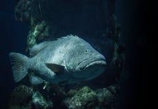 Paddelendstückfische Stockfoto
