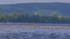 Paddeling avec le canoë sur la Volga banque de vidéos