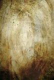 Paddestoel abstracte Textuur Royalty-vrije Stock Fotografie