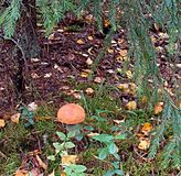 Paddestoel, bos, bladdaling, boom stock afbeelding