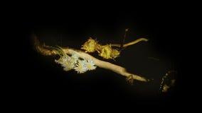 Paddestoel en bloemen stock footage