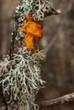 Paddestoel en korstmossen in eiken boomstam Stock Foto's