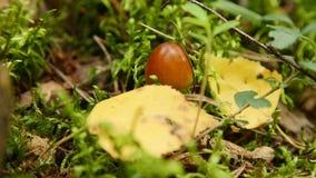 Paddestoel in het bos stock videobeelden