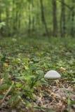 Paddestoel in het bos royalty-vrije stock afbeeldingen