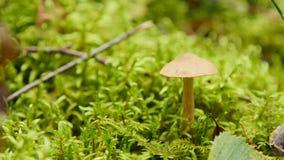 Paddestoel in het bos stock footage