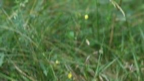 Paddestoel in het gras stock footage