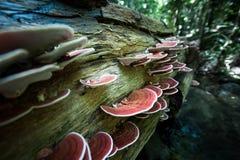 Paddestoel het groeien op bomen Stock Afbeeldingen