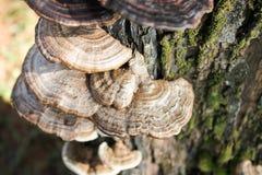 Paddestoel het groeien op een hout Royalty-vrije Stock Afbeelding