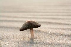 Paddestoel het groeien op zand Royalty-vrije Stock Afbeelding
